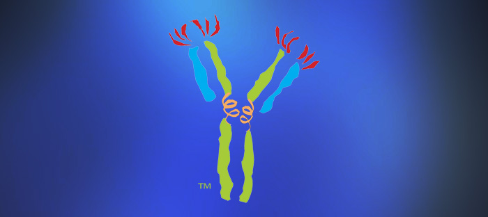 Custom Antibodies Service cover image