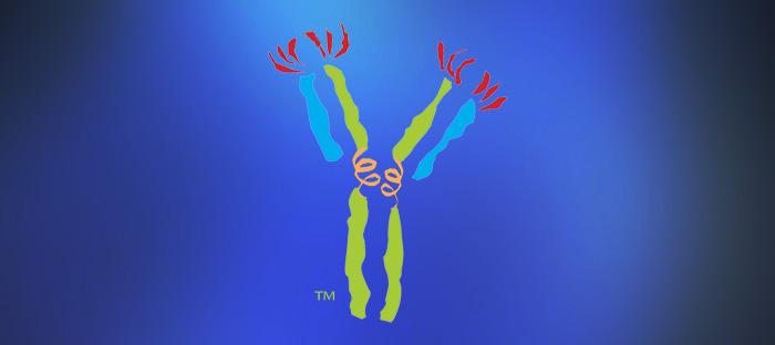 Custom Antibodies Service cover image